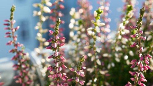 Bunter Herbstgarten: Was man im Oktober und November noch einpflanzen kann