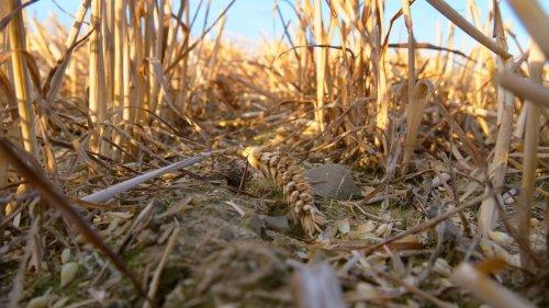 Rechnungshof kritisiert Wasserverschwendung in EU-Landwirtschaft
