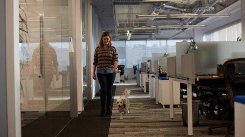 Werden Büros überflüssig? Wie die Pandemie den Arbeitsplatz verändert