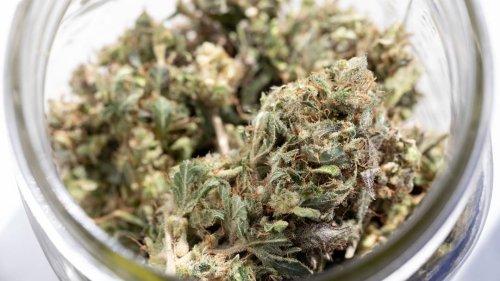 Warum nach der Wahl wieder Bewegung in die Cannabis-Debatte kommen könnte