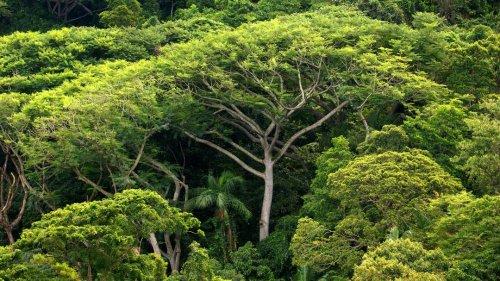 """Naturschutzexperte: """"Die Corona-Krise ist auch eine Artenkrise"""""""
