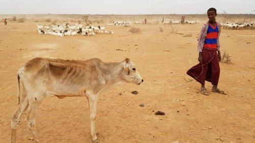 Hunger, Gewalt, Instabilität: Wahlen in Äthiopien mit düsteren Vorzeichen