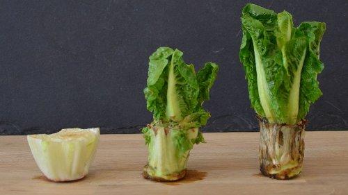 Regrowing: So wachsen aus Gemüseresten auf der Fensterbank neue Pflanzen
