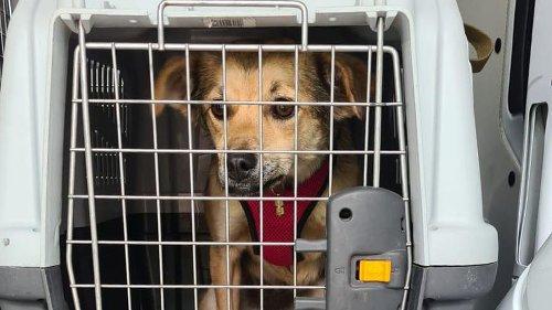 Paar verkauft Hundewelpen illegal auf Parkplatz in Bremen