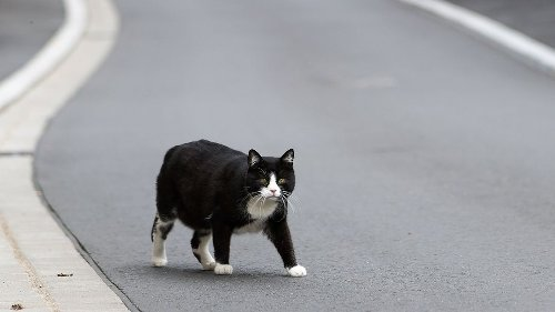 Erfindung: Es gibt jetzt Katzenfutter aus zerhackten Mäusen