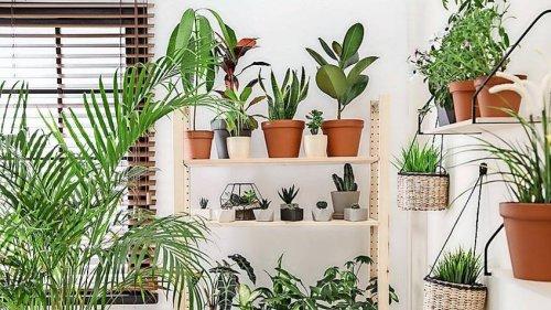 Zimmerpflanzen – mit dieser Pflege kommen sie gut durch Herbst und Winter