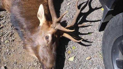 Jäger in Oregon von verwundetem Hirsch getötet