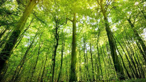Alle Bundesländer verfehlen Vorgaben zu unberührtem Wald