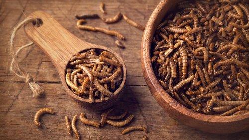 Gar nicht schleimig – und sehr vitaminreich: So bereiten Sie Mehlwürmer richtig zu