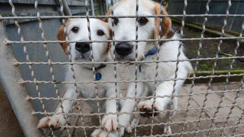 Nach Ende der Lockdowns: Immer mehr Halter geben ihre Tiere wieder ab