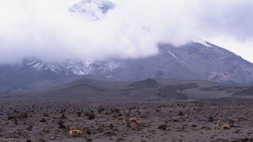 Mindestens drei Tote bei Lawinenunglück in Ecuador - Bergsteiger vermisst