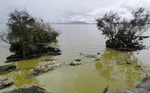 Satellites used to diagnose health of Bay of Plenty lakes