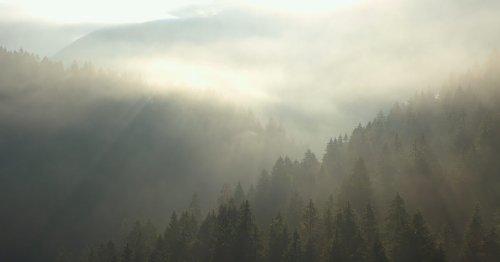¿Cómo es que el reloj manual más delgado del mundo, de Piaget, lleva dentro un bosque suizo?