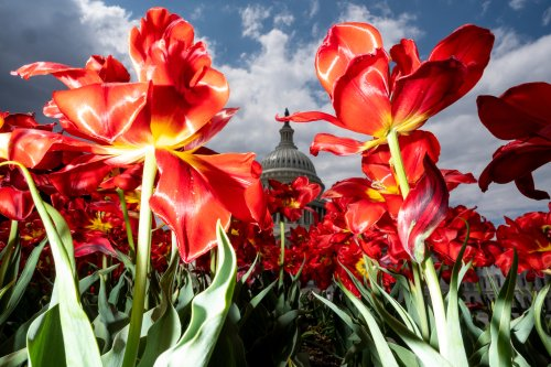 Photo of the day: April flowers - Roll Call