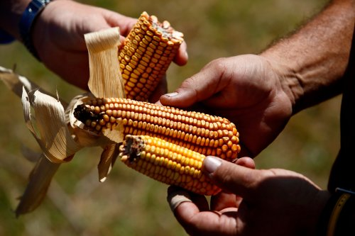 The Climate Crisis Is Moving Us Toward a Food Catastrophe