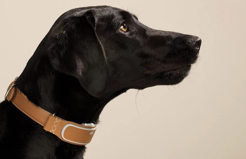 RS Recommends: The Best GPS Dog Collars and Trackers