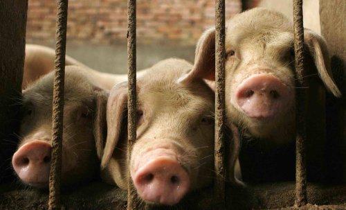 Gunter Blank geht essen: Das gute Schwein