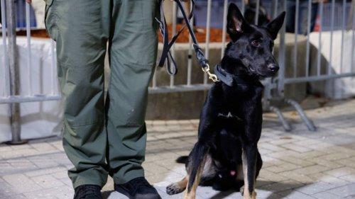 Konzert von Fury In The Slaughterhouse: Können Hunde Corona erschnüffeln?