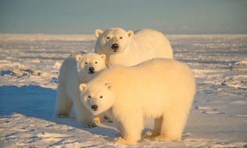 Arctique : l'administration Biden suspend les travaux de forage