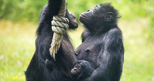 Neue Zahlen des Umweltministeriums: Deutsche Zoos verkauften 2500 artgeschützte Tiere ins Ausland