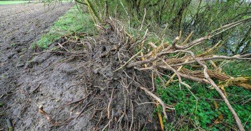Naturfevel in Obrighoven: Nabu beklagt Holunder-Rodung im Schutzgebiet