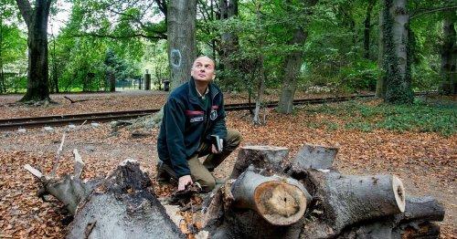 Interview mit Förster Christoph Beemelmans: 20 Jahre im Dienste des Waldes