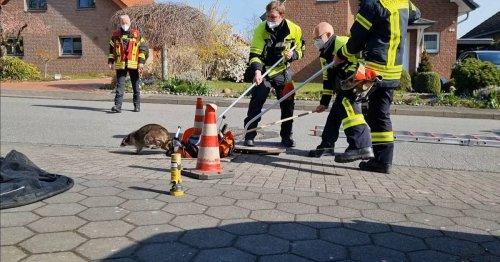 Tierischer Einsatz in NRW: Feuerwehr rettet Waschbären aus Kanalschacht