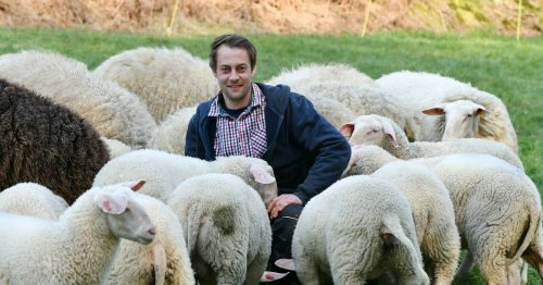 Ostfrisische Milchschafe aus der Schloss-Stadt prämiert: Ausgezeichnete Schafe aus Hückeswagen