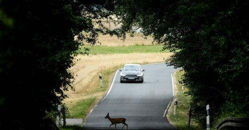 Saisonales Phänomen: Die Zahl der Wildunfälle in NRW steigt