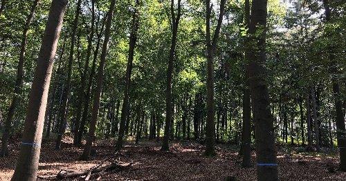 Große Nachfrage nach Beisetzung im Elmpter Wald: Friedwald wächst um weitere Bäume