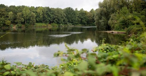Natur in Meerbusch: Streit um Naturschutz am Latumer See
