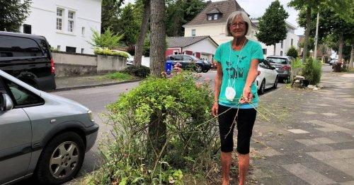 """Ärger über gestutzte Rosen in Mönchengladbach: """"Ahnung von Pflanzen hatte der nicht"""""""