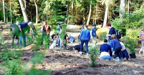 Aktion auf den Süchtelner Höhen: Viersener pflanzen 1500 Bäume und sammeln Geld