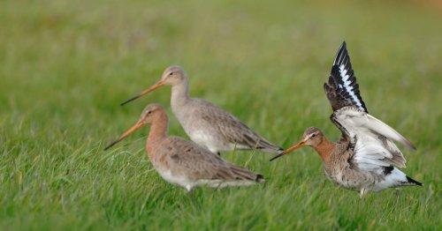 Nabu in Kranenburg: Bauarbeiten für den Lebensraum von Wiesenvögeln beginnen