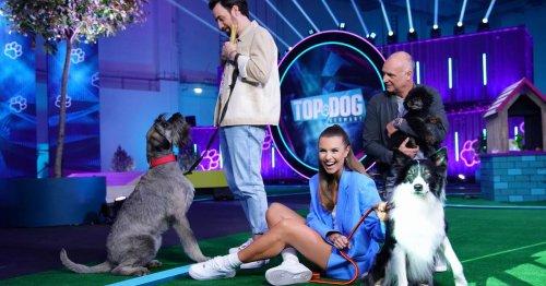 Alle Infos zur RTL-Sendung: Top Dog Germany – Auf der Suche nach dem besten Hund Deutschlands