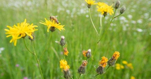 Umgang mit der Umwelt: Von Bienen und Engeln