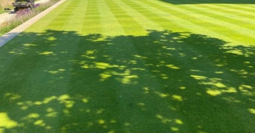 Get a gorgeous and low maintenance lawn that only has to be cut once a year