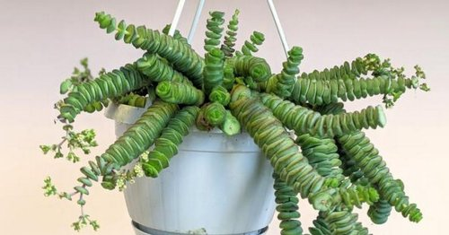 Expert warns we shouldn't be watering our houseplants in the winter months