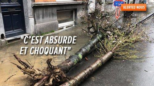 """Des arbres """"massacrés parce qu'ils rayent les camions"""" à Ixelles ? La commune admet une erreur"""