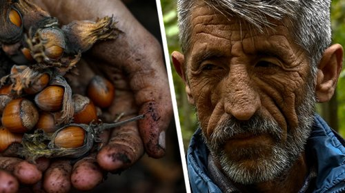 """Les producteurs de noisettes de Turquie dénoncent la mainmise sur leurs récoltes de Ferrero: """"Une injustice pure"""""""