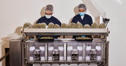 'If you build it, they will come': California desert cashes in on early cannabis investment