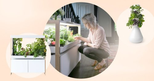 The 6 best indoor garden kits and systems of 2021