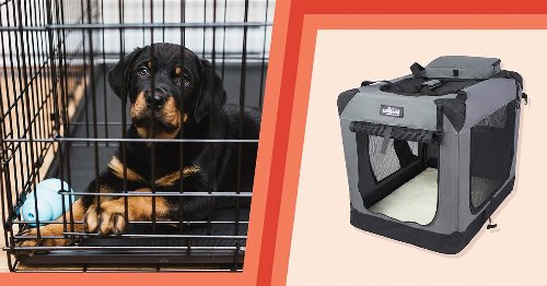 How to crate train your dog, according to experts