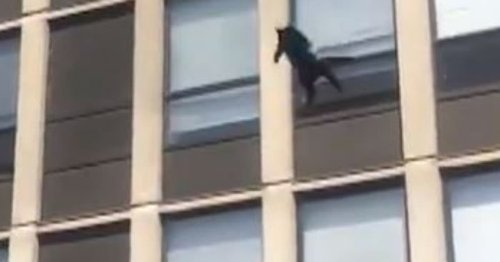 Video shows Chicago cat surviving 5-story jump, bouncing once and walking off after fleeing fire