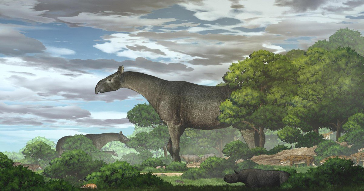 New fossils of giant rhinos — the largest land mammals ever — are found in China - cover