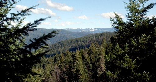 Sheriff to announce what killed California family on hike in Sierra National Forest