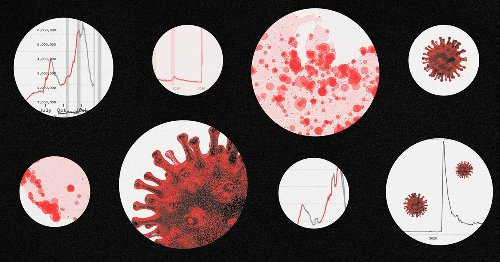 This pandemic year, in five charts
