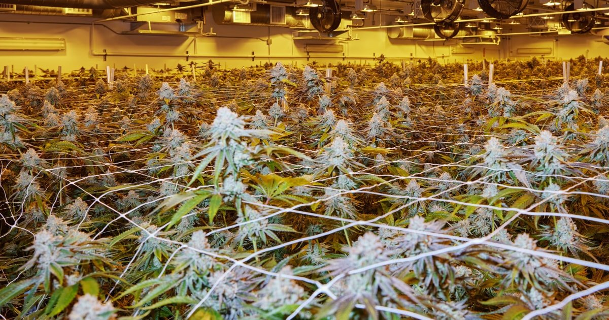 From May: House reintroduces bill to decriminalize cannabis, create social equity programs