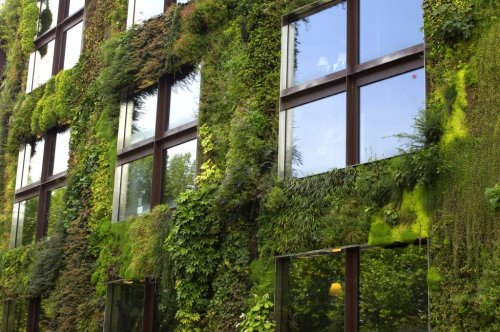 Is the boom in green roofs and living walls good for sustainability?