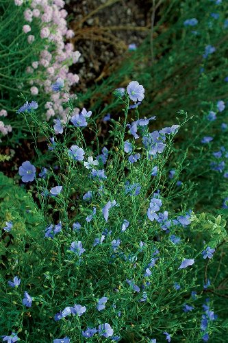 20 Great Perennials to Start From Seed